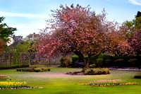 Gourock Park in Spring
