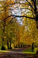 Autumn in the park 2