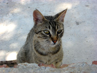 Beautiful cat on Panormitis