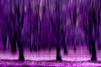 Purple trees arty1