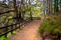 Pathway at the Falls of Clyde  2