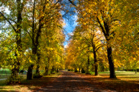 Autumn in the park 4