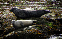 Seals from the narrows